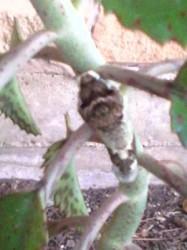 Worm that looks like snake