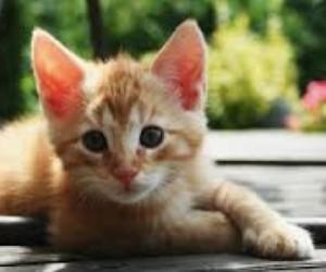 Cat Worming