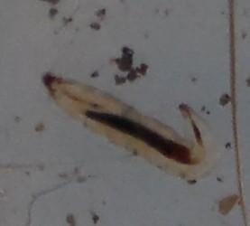 Close-up of small larva