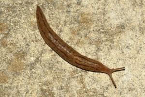 AAW - Red Slug in Bathroom