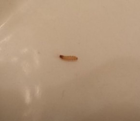 Worm Like Things On Kitchen Wall