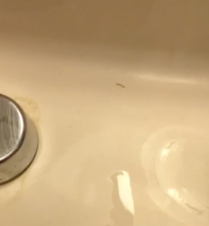 Tiny Worm In Bathroom Sink All About Worms