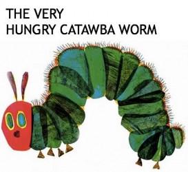 How to Raise Catawba Worms