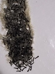 Worms In A Cluster On The Wall Larva All About Worms
