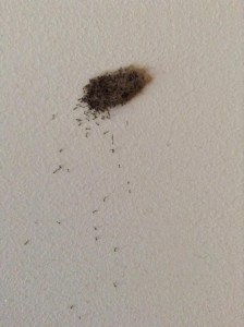 Moth Fly Larvae on Bathroom Wall - All About Worms