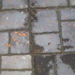 Orange Worms Found on Patio are Pine Sawfly Larvae