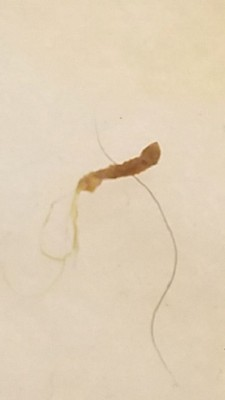 wormperhapsmucus