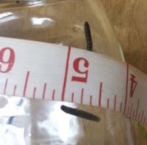 In Jar With Ruler Cropped