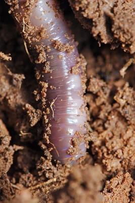 Worm Studies Tell Us About the Nature of Death