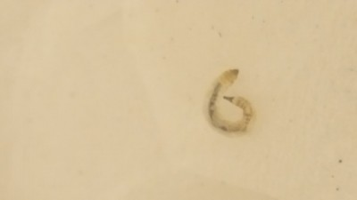 Water worms in bathroom