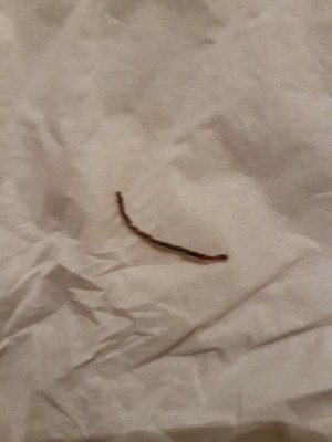 Reader Discovers Dead Worms on Floor