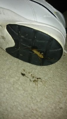 Worms in New Home are Probably Centipedes