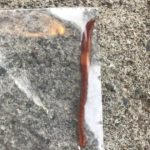 Is Worm in Toilet Earthworm or Parasite?