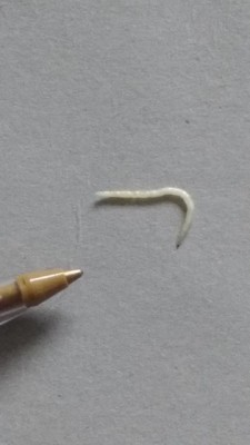 What Is White Worm on Carpet?