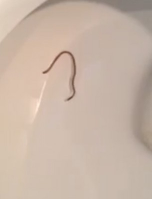 How Did Worms Get Into Reader's House?