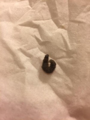 What Worm Is Wiggling Around on Bathroom Floor?