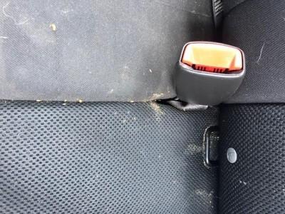 Bugs in Backseat of Car are Carpet Beetle Larvae