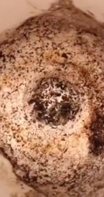 Larvae Squirm Around Toilet Bowl Brush Holder