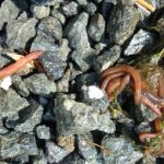 How Long Can Earthworms Live Underwater?