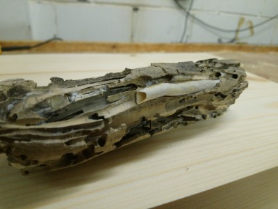 What Creature Was Calcified in Old Wood?