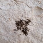 Cluster of Larvae Discovered on Limestone