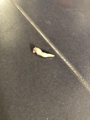 White Slimy Creature on Kitchen Floor May be an Underdeveloped Slug