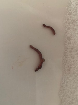 Methods of Dealing with Worms Coming Out of Faucets
