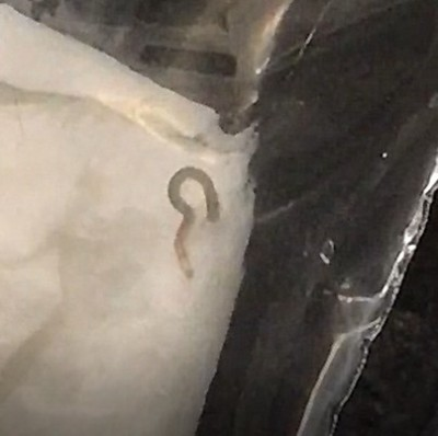 The Unclear Identity of the Clear Worm Found on the Shower Floor