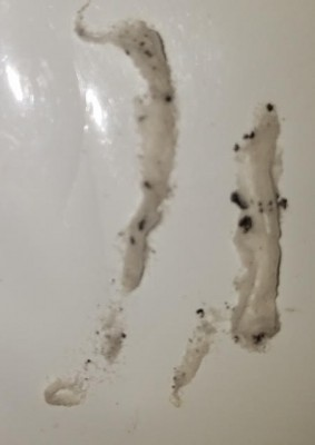 An Array of Toilet Paper-Like Worms Freak Out the Resident of this Fresno Home