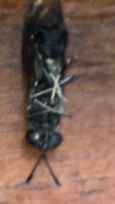 Jet Black Parasites that Resemble Human Hair Trouble Woman