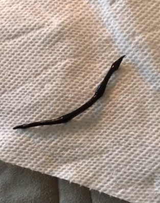 Creepy, Glossy Black Worm is Likely a New Guinea Flatworm