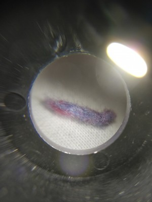 Multicolored Worm-shaped Object Found on Bedsheet Turns Out to be a Piece of Lint
