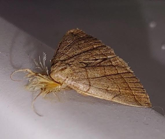 Moth Infestation Spawns Concerns Over Parasites