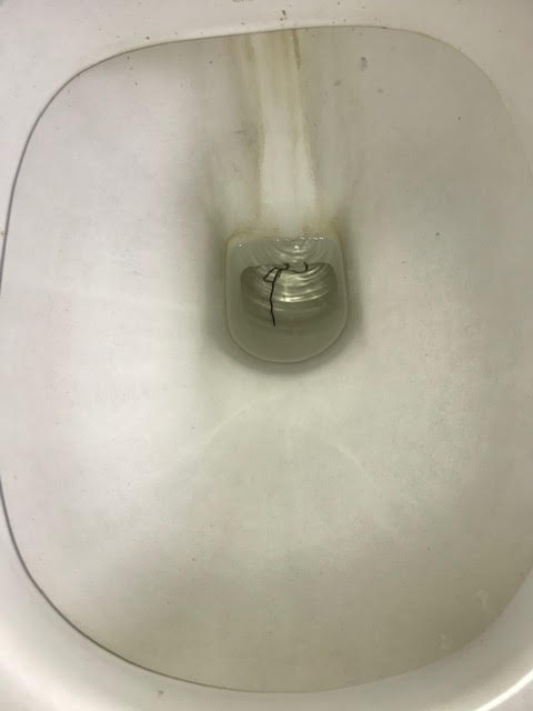Long, Black Worm Found in Toilet is a Horsehair Worm